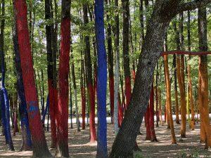 Padurea colorata