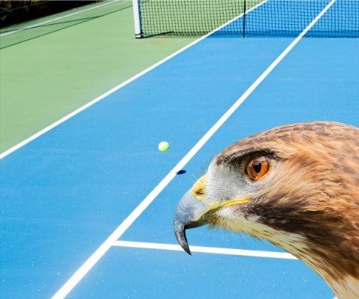 hawk-eye live